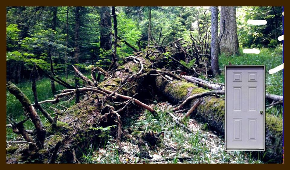 «Туристическое агентство: Русский лес» отчетная выставка студентов КИСИ